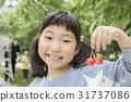 櫻桃狩獵圖像 31737086