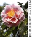Full Bloom 31738482