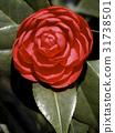Full Bloom 31738501