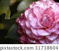 Full Bloom 31738604