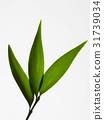 Leaf 31739034