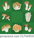 mushroom, mushrooms, variation 31744959