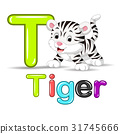 cute baby white tiger 31745666