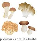 matsutake mushroom, maitake, nameko 31746468
