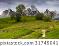 trees on a hill by the road in High Tatras 31749041