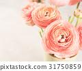Beautiful pink ranunculus bouquet 31750859