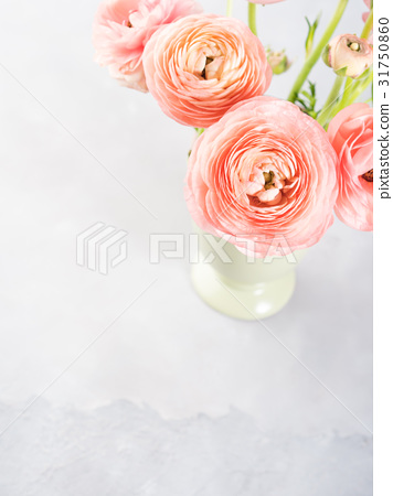 Beautiful pink ranunculus bouquet 31750860