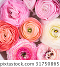 Beautiful pink ranunculus in bowl with water 31750865