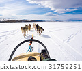 Dog sledding in Frozen Lake Baikal 31759251