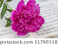 pink peony on old musical notes book 31760318