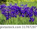 戶外 植物 植物學 31767287