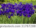户外 植物 植物学 31767288