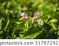 户外 植物 植物学 31767292