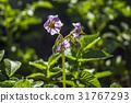 户外 植物 植物学 31767293