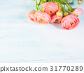 Beautiful pink ranunculus bouquet on turquoise 31770289