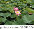 花朵 花 花卉 31781024