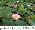 花朵 花 花卉 31781026