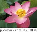 花朵 花 花卉 31781038