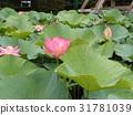 花朵 花 花卉 31781039