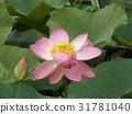 花朵 花 花卉 31781040
