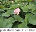 花朵 花 花卉 31781041