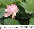 花朵 花 花卉 31781042