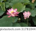 花朵 花 花卉 31781044
