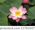 花朵 花 花卉 31781047