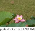 花朵 花 花卉 31781168