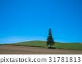 나무, 푸른 하늘, 파란 하늘 31781813