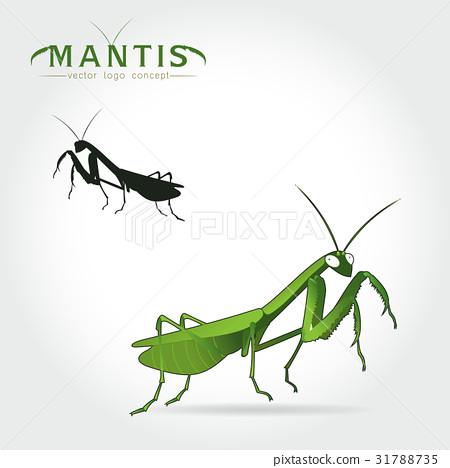 Green Mantis Vector 31788735