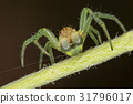 A beautiful spider 31796017