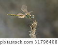 A close-up of a beautiful dragonfly 31796408