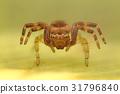 Napoleon spider portrait 31796840