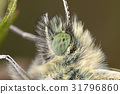 Butterfly eye 31796860