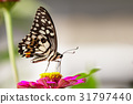 Image of The Lime Butterfly on nature background. 31797440