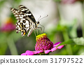 Image of The Lime Butterfly on nature background. 31797522