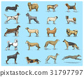 dog breeds engraved, hand drawn vector 31797797