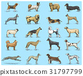 dog breeds engraved, hand drawn vector 31797799