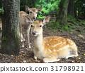สัตว์,ภาพวาดมือ สัตว์,กวาง 31798921