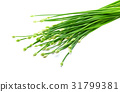 Chives flower or Chinese Chive isolated on white  31799381