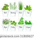 Set of culinary herbs in white pots with labels.  31800627