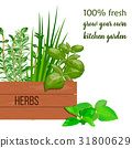 Wooden crate of fresh cooking herbs in wooden box. 31800629