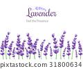 vector, lavender, flower 31800634