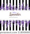 lavender, flower, vector 31800668