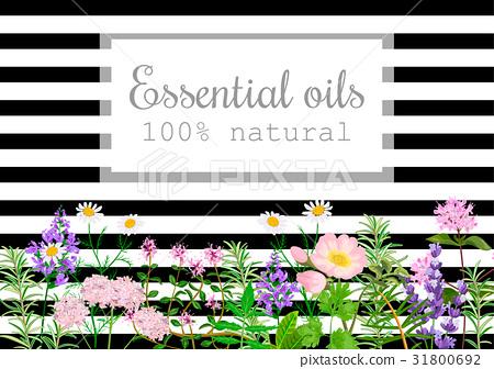 Popular essential oil plants set,  black stripes 31800692
