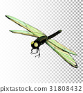 dragonfly, white, vector 31808432