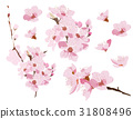 Cherry blossom branch vector. Pink flower element  31808496