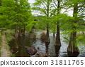 แหล่งน้ำ,สระน้ำ,ฤดูใบไม้ผลิ 31811765