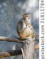 Image of mother monkey and baby monkey sitting on  31813784